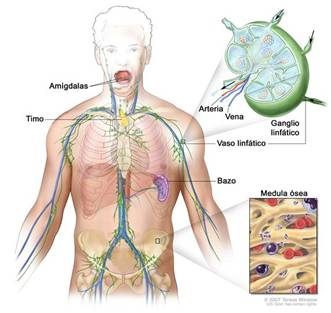 cancer de medula osea