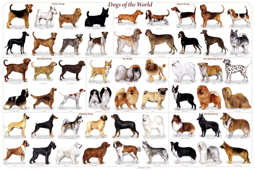 Common Dog Breeds