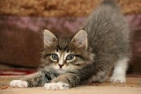 uñas de gatos