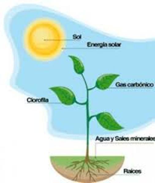 De que se alimentan las plantas (2)