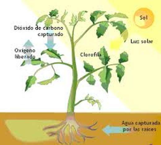 De que se alimentan las plantas (3)