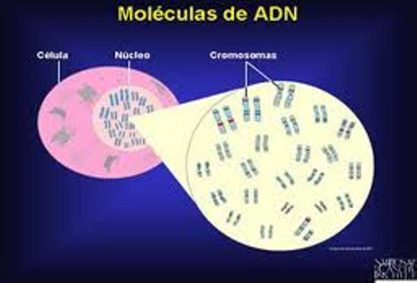 Donde se encuentra el ADN (2)