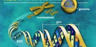 Donde se encuentra el ADN (3)